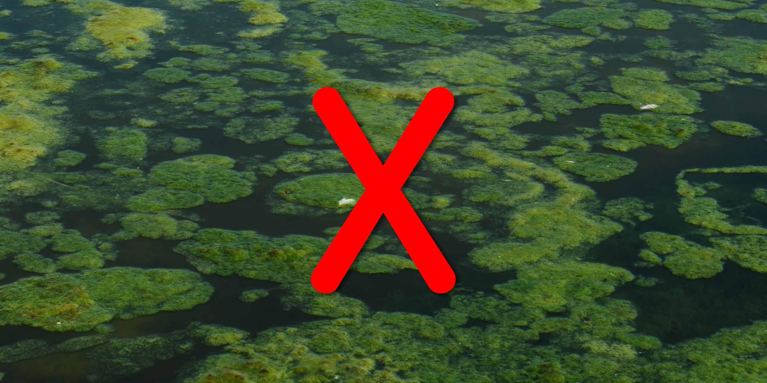 Cut Out Algae.jpg