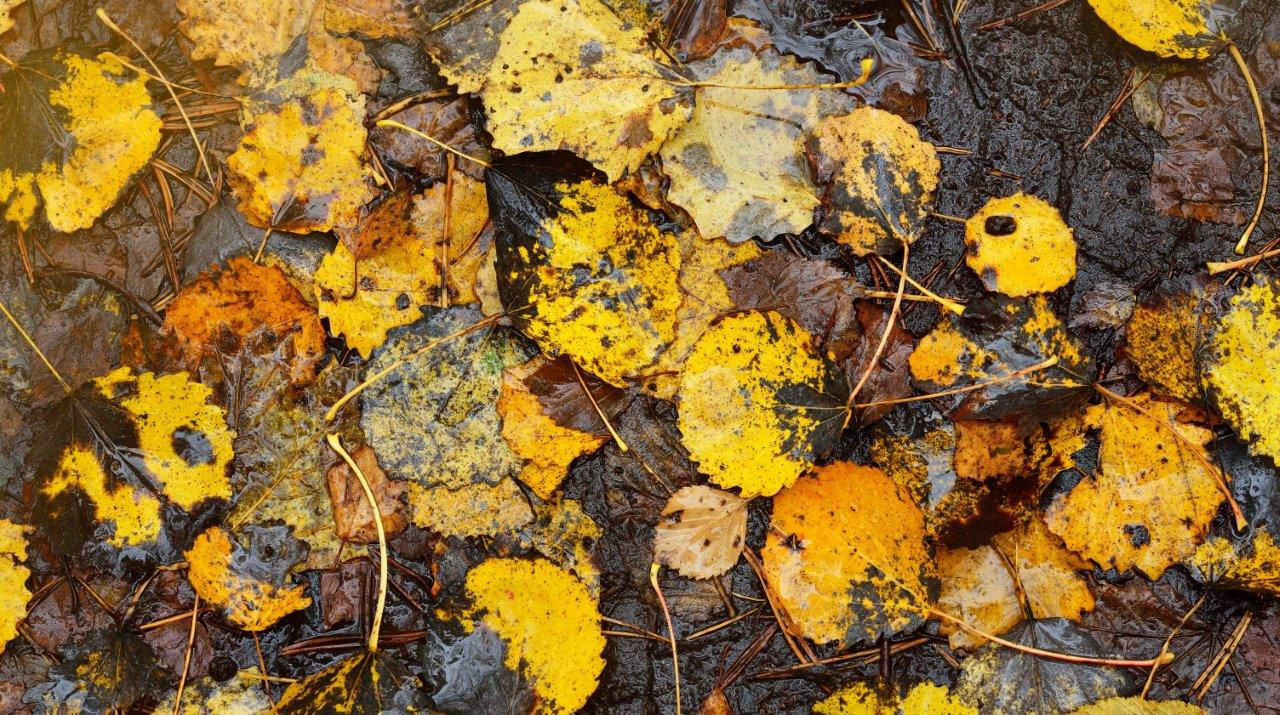 5 Ways to Keep Leaves Out of Your Rainwater Tank